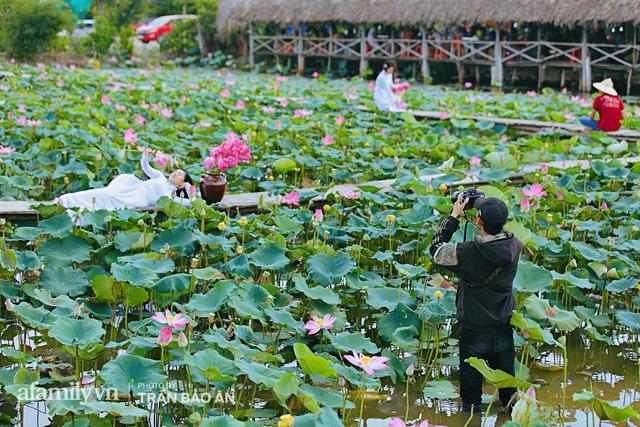 Mới tháng 9, cánh đồng hoa hướng dương và đầm sen ngay trong Sài Gòn đã nở cực rộ đẹp như Tết, tốn có 40.000 đồng được ngắm cả ngày trời! - Ảnh 16.
