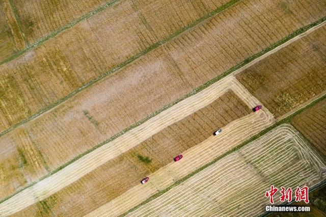 Những hình ảnh tuyệt đẹp của vựa lúa Tây Tạng trong mùa thu hoạch - Ảnh 4.
