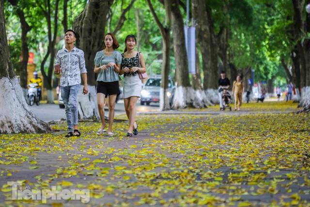 Lá phủ vàng con phố trong tiết trời chuyển sang thu ở Hà Nội - Ảnh 5.