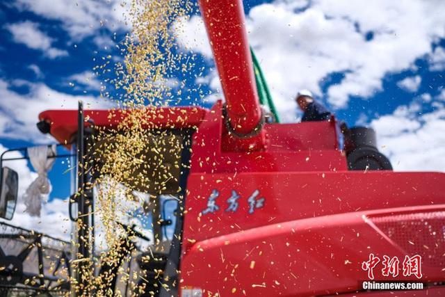 Những hình ảnh tuyệt đẹp của vựa lúa Tây Tạng trong mùa thu hoạch - Ảnh 5.