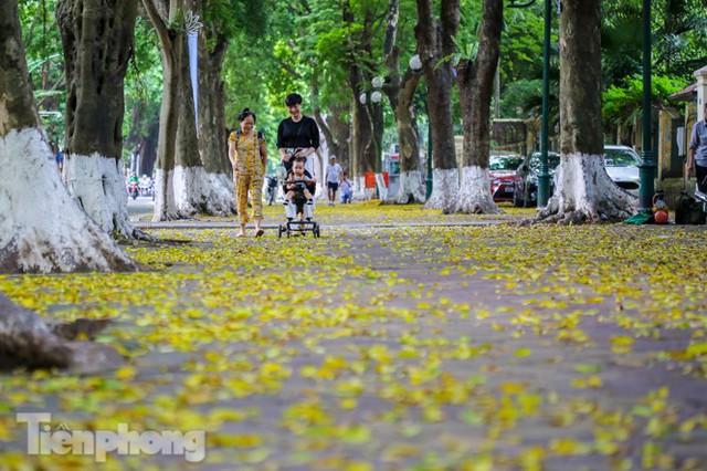 Lá phủ vàng con phố trong tiết trời chuyển sang thu ở Hà Nội - Ảnh 6.
