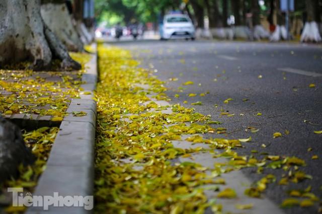 Lá phủ vàng con phố trong tiết trời chuyển sang thu ở Hà Nội - Ảnh 9.