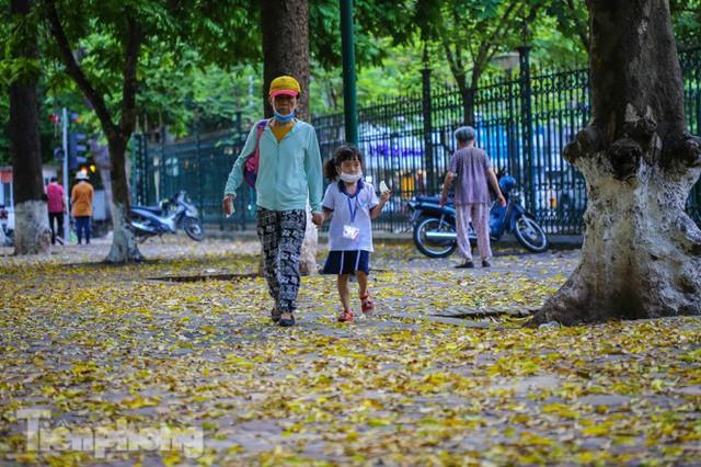 Lá phủ vàng con phố trong tiết trời chuyển sang thu ở Hà Nội - Ảnh 10.