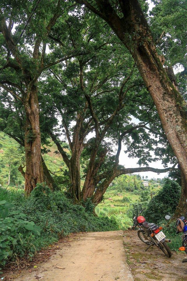 Nhật ký hành trình tới Hà Giang của cô gái yêu du lịch bụi: Làng Thiên Hương như một ngôi làng cổ tích, Du Già đẹp mê ly! - Ảnh 8.