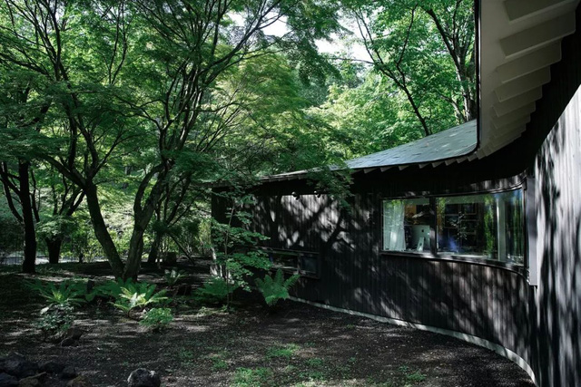 Nữ nhiếp ảnh gia 65 tuổi xây nhà trên núi, một mình an dưỡng tuổi già cùng mèo cưng - Ảnh 2.
