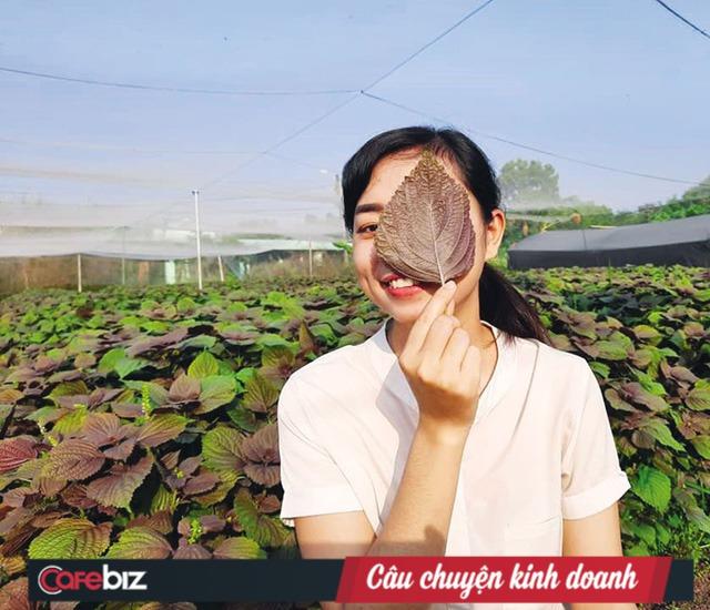 Founder Nguyễn Ngọc Hương kể về hành trình mang rau má Việt bán cho cả châu Âu: Chuẩn bị vùng trồng tốt, làm sản phẩm chất lượng thế giới và chờ thời cơ - Ảnh 2.