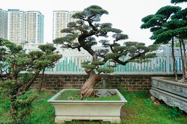Cận cảnh khu vườn tiền tỷ của tay chơi cây cảnh nức tiếng Hà thành - Ảnh 8.