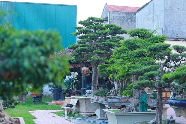 Cận cảnh khu vườn tiền tỷ của tay chơi cây cảnh nức tiếng Hà thành - Ảnh 9.