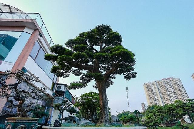 Cận cảnh khu vườn tiền tỷ của tay chơi cây cảnh nức tiếng Hà thành - Ảnh 10.