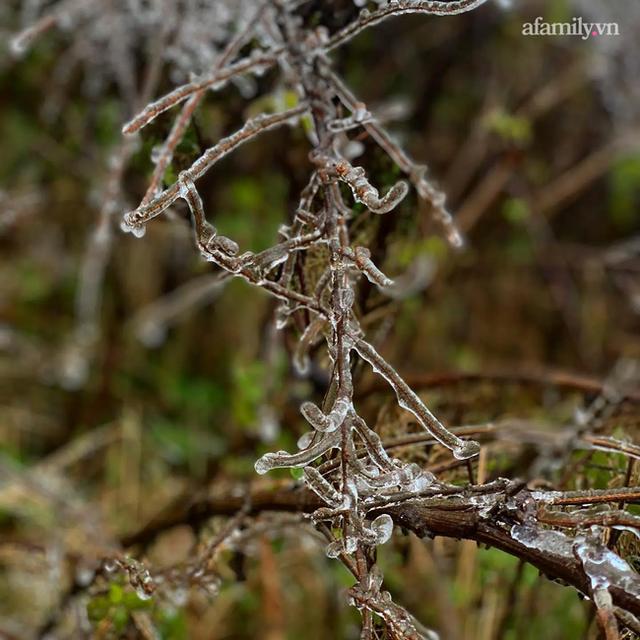 Những khoảnh khắc băng tuyết phủ trắng Y Tý - Sapa, hoa đào nở đóng băng đẹp như cổ tích là dịp vô cùng hiếm hoi để du lịch vào thời điểm này! - Ảnh 16.