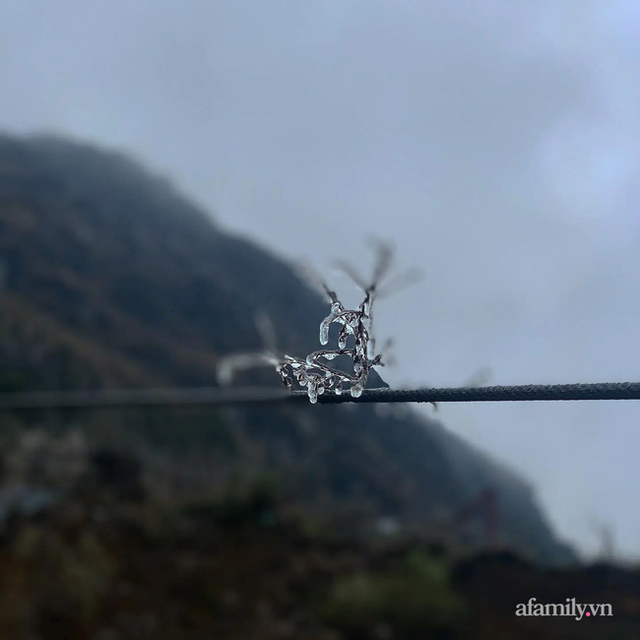 Những khoảnh khắc băng tuyết phủ trắng Y Tý - Sapa, hoa đào nở đóng băng đẹp như cổ tích là dịp vô cùng hiếm hoi để du lịch vào thời điểm này! - Ảnh 19.