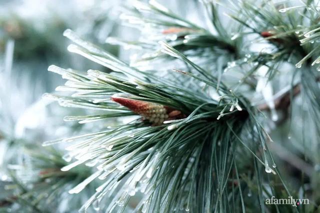 Những khoảnh khắc băng tuyết phủ trắng Y Tý - Sapa, hoa đào nở đóng băng đẹp như cổ tích là dịp vô cùng hiếm hoi để du lịch vào thời điểm này! - Ảnh 6.