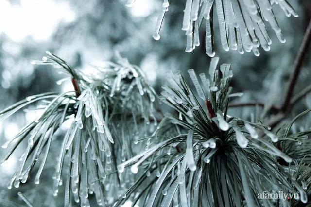 Những khoảnh khắc băng tuyết phủ trắng Y Tý - Sapa, hoa đào nở đóng băng đẹp như cổ tích là dịp vô cùng hiếm hoi để du lịch vào thời điểm này! - Ảnh 8.