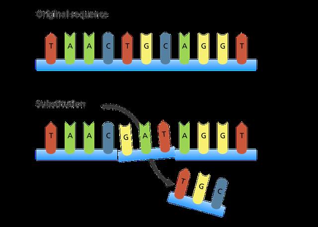 Giải thích con đường biến chủng của virus SARS-CoV-2 bằng kiến thức sinh học lớp 9 - Ảnh 2.