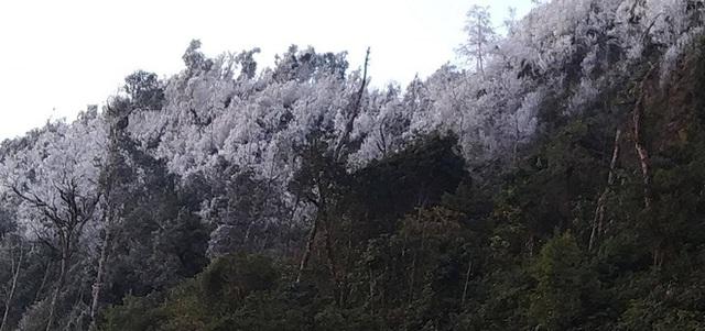 Trời hửng nắng nhưng tuyết vẫn rơi dày đặc, phủ trắng rừng cây ở biên giới Nghệ An - Ảnh 5.