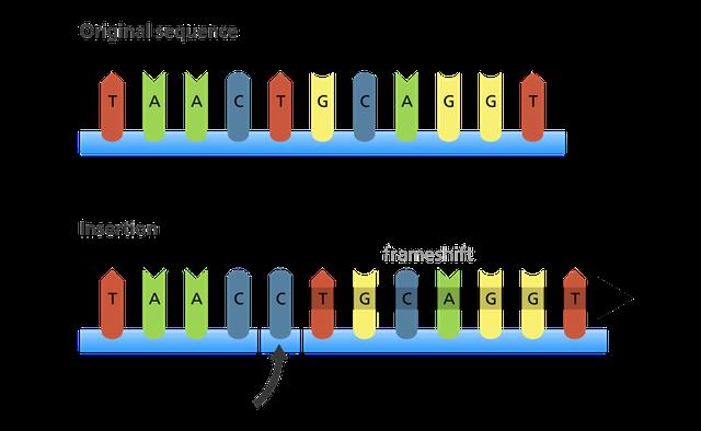 Giải thích con đường biến chủng của virus SARS-CoV-2 bằng kiến thức sinh học lớp 9 - Ảnh 4.