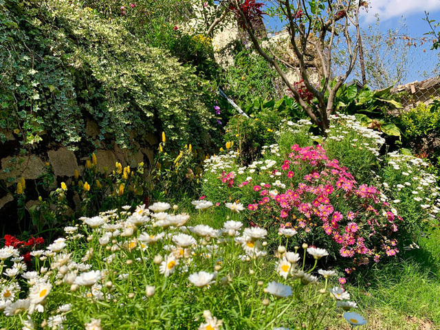 Rời Sài Gòn, cặp vợ chồng lên Đà Lạt xây ngôi nhà hướng mặt ra thung lũng, nhìn vườn hoa đào đẹp như cổ tích mà mê mệt - Ảnh 8.