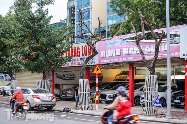 Hàng cây sưa trăm tỷ chết khô trên phố Hà Nội sẽ xử lý thế nào? - Ảnh 1.