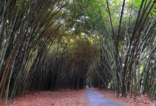 Khám phá vườn tre độc nhất vô nhị ở miền Tây - Ảnh 1.