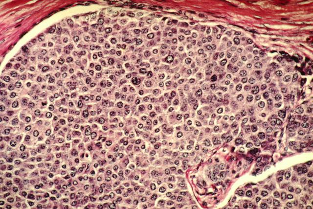 Cứ mỗi giây, có 3,8 triệu tế bào trong cơ thể phải chết đi để bạn được sống - Ảnh 3.