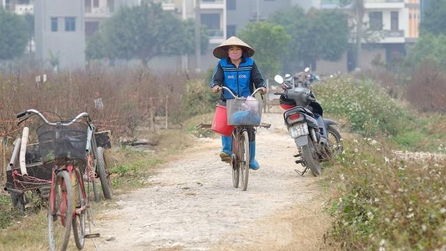 Nông dân trồng đào Hải Dương điêu đứng vì nguy cơ lỗ nặng - Ảnh 5.