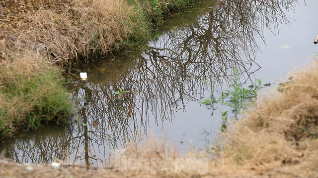 Nông dân trồng đào Hải Dương điêu đứng vì nguy cơ lỗ nặng - Ảnh 8.
