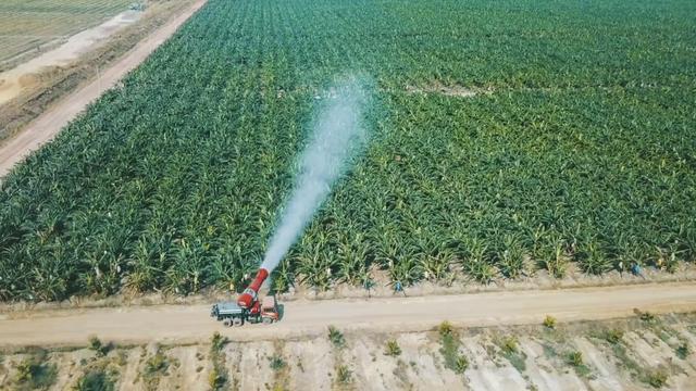 HAGL Agrico - Công ty nông nghiệp có quỹ đất lớn nhất Việt Nam còn lại gì sau khi về tay THACO? - Ảnh 1.