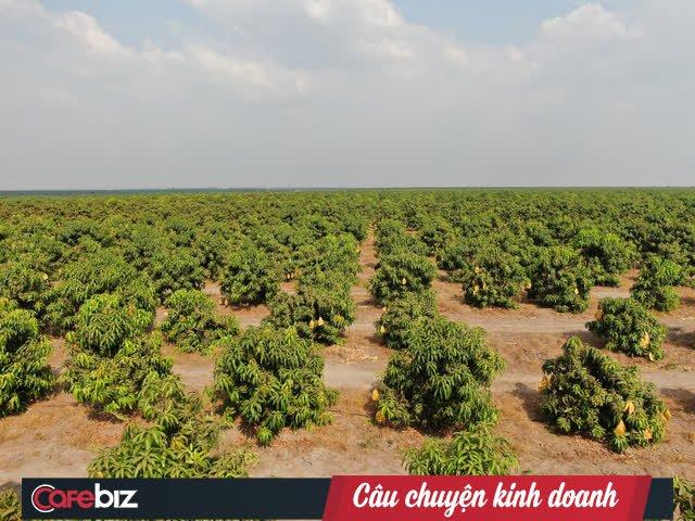 HAGL Agrico - Công ty nông nghiệp có quỹ đất lớn nhất Việt Nam còn lại gì sau khi về tay THACO? - Ảnh 3.