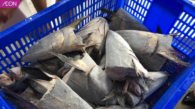 AEON Việt Nam hỗ trợ thức ăn cho các loài động vật ở Thảo Cầm Viên, mỗi tuần 400kg - Ảnh 2.