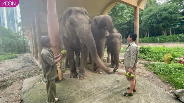 AEON Việt Nam hỗ trợ thức ăn cho các loài động vật ở Thảo Cầm Viên, mỗi tuần 400kg - Ảnh 1.