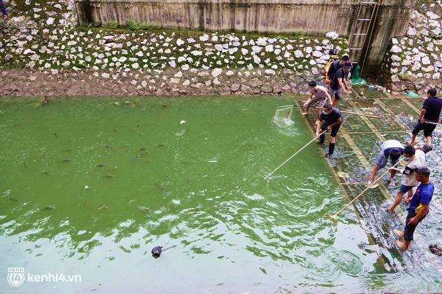 Hà Nội: Sông Tô Lịch bất ngờ chuyển màu xanh ngắt, người dân mang theo bao bắt hàng trăm cân cá đem về - Ảnh 5.