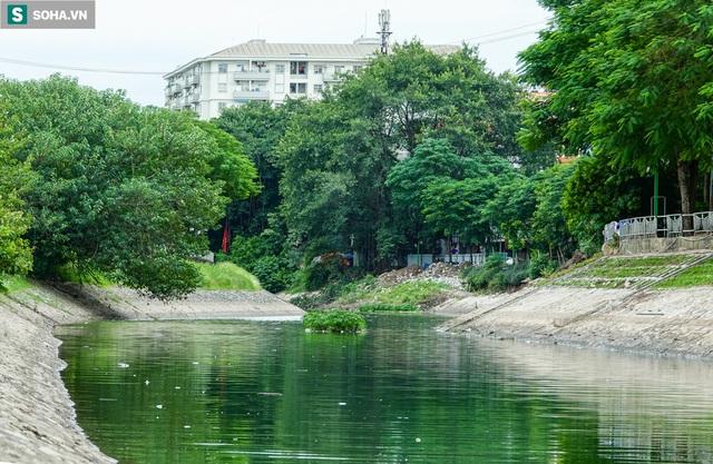 [ẢNH] Cận cảnh dòng nước xanh ngắt hiếm thấy tại sông Tô Lịch, cá bơi nhộn nhịp hàng đàn - Ảnh 1.