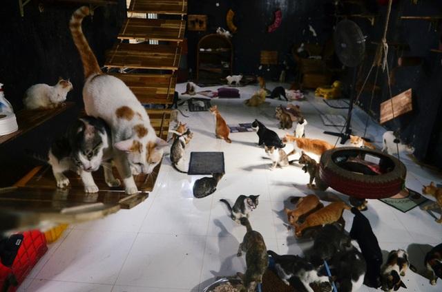 Cặp vợ chồng cưu mang 100 con chó, mèo bị chủ F0 bỏ rơi mùa dịch: 'Chúng tôi không sinh con để chu toàn cho tụi nhỏ' - Ảnh 8.