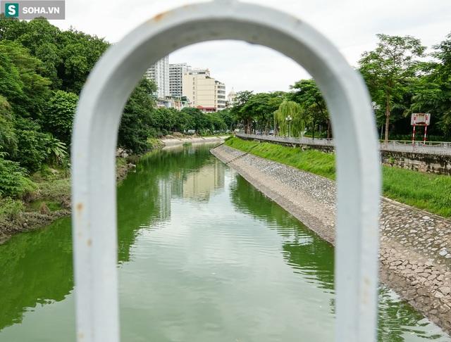 [ẢNH] Cận cảnh dòng nước xanh ngắt hiếm thấy tại sông Tô Lịch, cá bơi nhộn nhịp hàng đàn - Ảnh 8.