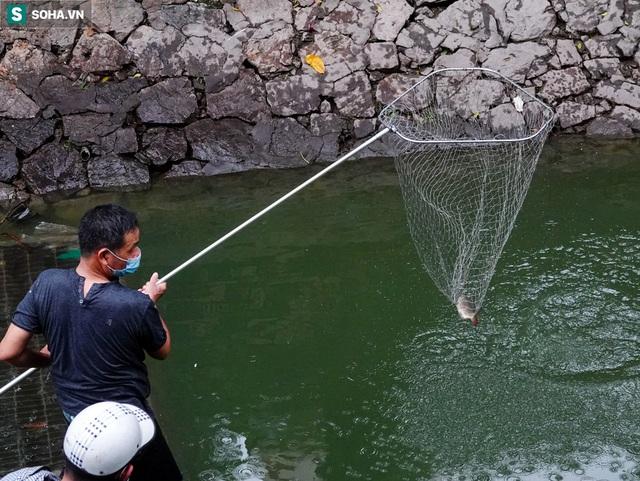 [ẢNH] Cận cảnh dòng nước xanh ngắt hiếm thấy tại sông Tô Lịch, cá bơi nhộn nhịp hàng đàn - Ảnh 9.