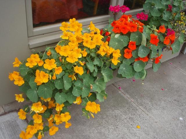 8 loài cây trồng trong nhà vừa đẹp vừa thơm, giúp đuổi muỗi hiệu quả mà không cần hóa chất - Ảnh 11.