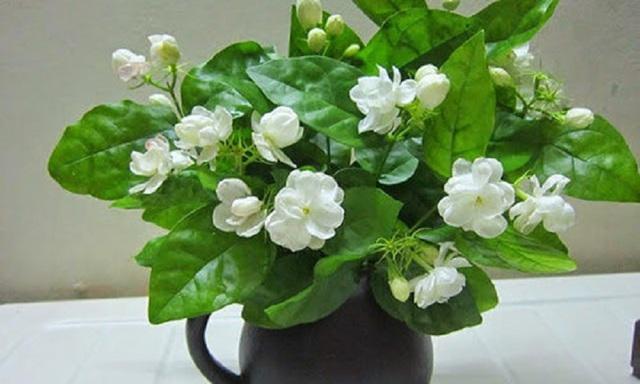 7 loại hoa cúng trên bàn thờ Tết vừa đẹp vừa hợp phong thủy và những kiêng kị khi chọn hoa - Ảnh 8.