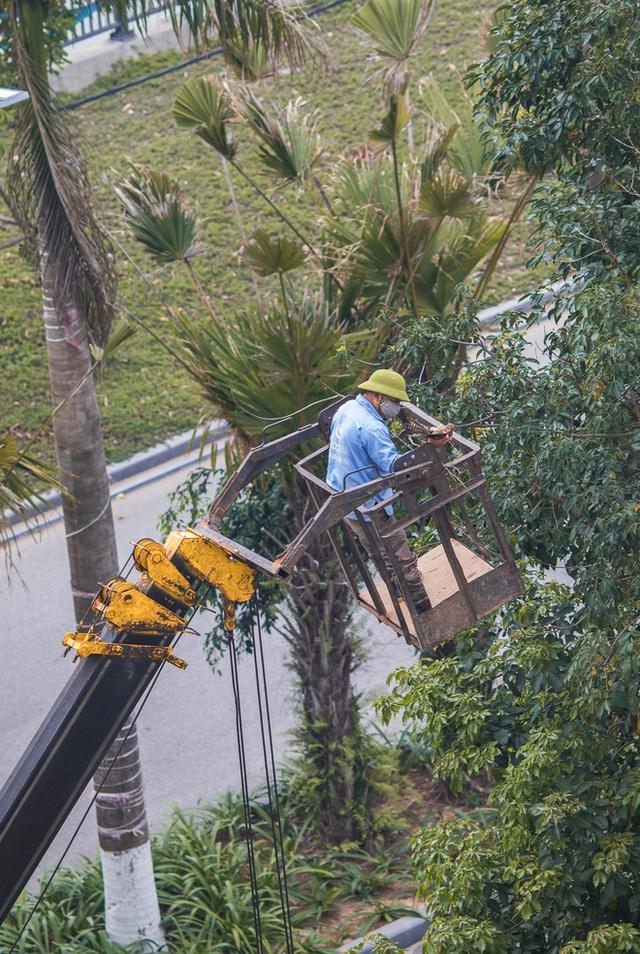 Những điều kì diệu nhỏ bé lấp lánh: Cư dân, công ty cây xanh ở Ecopark huy động xe cẩu chạy 10 km để giải cứu chú chim mắc trên cành cây - Ảnh 3.