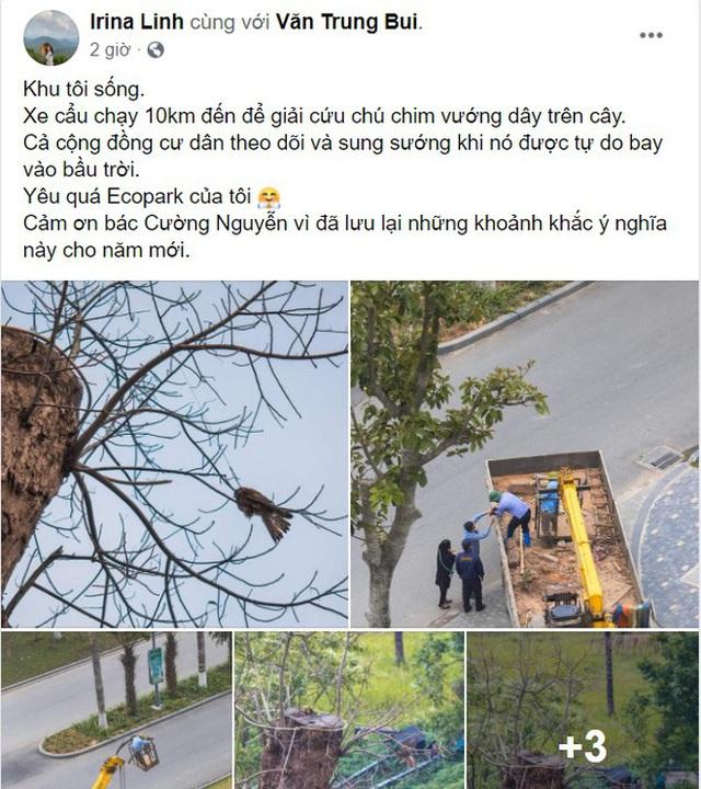 Những điều kì diệu nhỏ bé lấp lánh: Cư dân, công ty cây xanh ở Ecopark huy động xe cẩu chạy 10 km để giải cứu chú chim mắc trên cành cây - Ảnh 9.