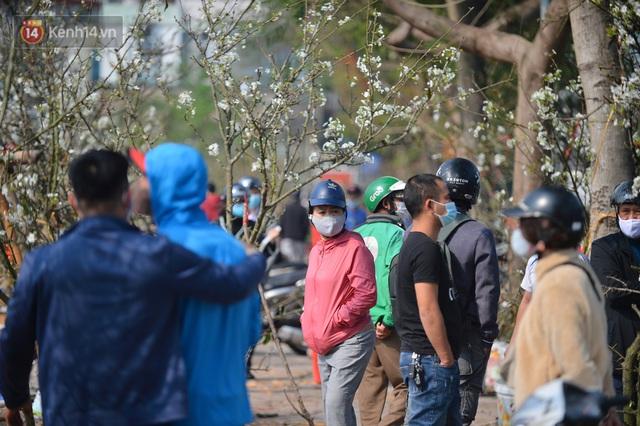Ảnh: Hàng trăm người dân Hà Nội đổ xô đi mua hoa lê về chơi Rằm tháng Giêng - Ảnh 8.