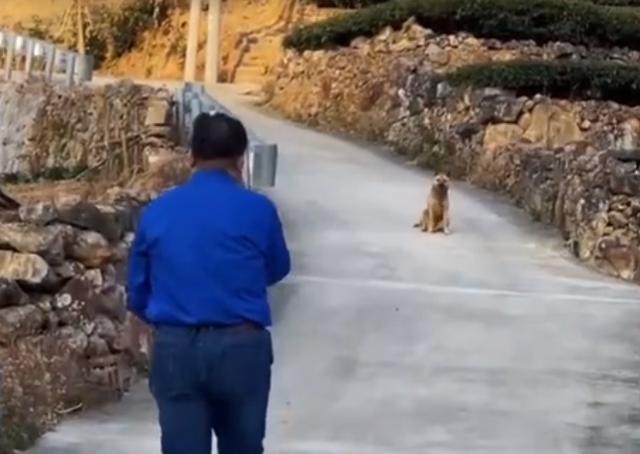 Xúc động khoảnh khắc chú chó già yếu từ biệt chủ trước khi rời nhà tìm nơi để... chết - Ảnh 2.