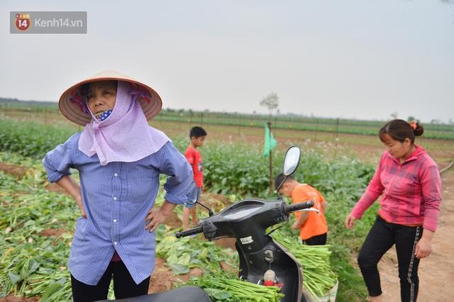 Ảnh: Nông dân Mê Linh nuốt nước mắt, nhổ bỏ hàng trăm tấn củ cải vì không tiêu thụ được - Ảnh 21.