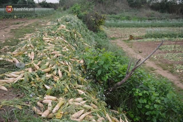 Ảnh: Nông dân Mê Linh nuốt nước mắt, nhổ bỏ hàng trăm tấn củ cải vì không tiêu thụ được - Ảnh 6.