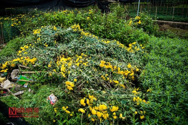Nông dân ngậm ngùi cắt bỏ hoa do dịch Covid-19  - Ảnh 7.