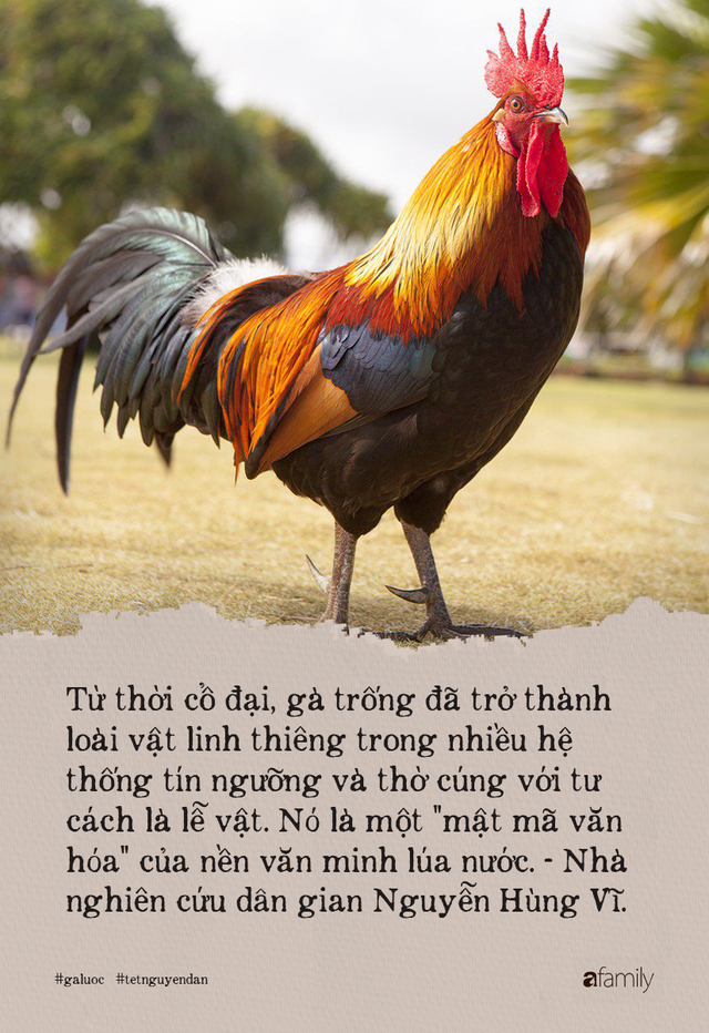 Lý do gà luộc là món không được phép thiếu trong mâm cỗ Việt, kén được kê vương từng khiến NSND Lê Khanh phải xuýt xoa thì cả năm may mắn, sung túc - Ảnh 4.