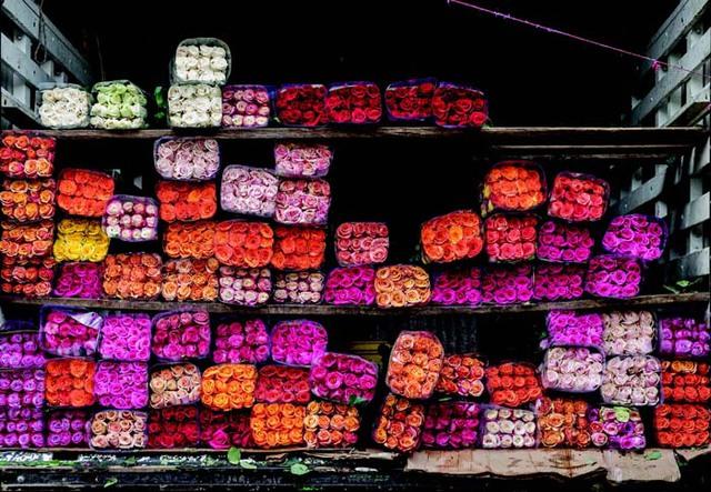 (Bài Tết) Colombia: Từ trùm buôn ma túy đến công xưởng hoa cho lễ Valentine, thu hàng trăm triệu USD/ngày dù không kỷ niệm ngày 14/2 - Ảnh 3.