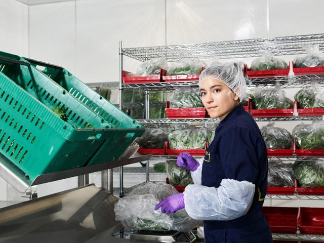 Sẽ thế nào khi rau được trồng trong nhà máy, bằng robot, AI và thế hệ nông dân 4.0? - Ảnh 12.