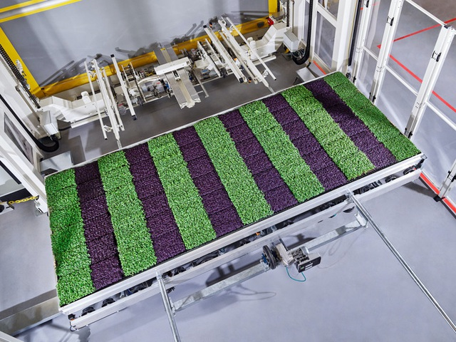 Sẽ thế nào khi rau được trồng trong nhà máy, bằng robot, AI và thế hệ nông dân 4.0? - Ảnh 9.