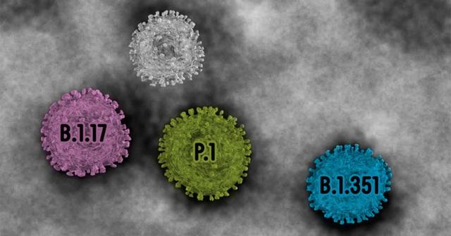 Giải mã từng chữ số trong tên biến thể virus SARS-CoV-2: B.1.1.7, B.1.351 nghĩa là gì? - Ảnh 1.