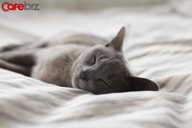 Khoẻ, thông minh, giàu có nhờ ngủ đúng cách: 6 thói quen nhỏ trước khi ngủ nên thay đổi  - Ảnh 1.